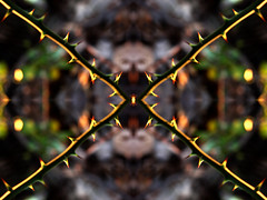 The Inner Sanctum (Jason A. Samfield) Tags: abstract art nature lines outdoors blurry focus dof natural artistic outoffocus line inner depthoffield artsy thorns thorn depth tessellation tessellations goldenhour sanctu