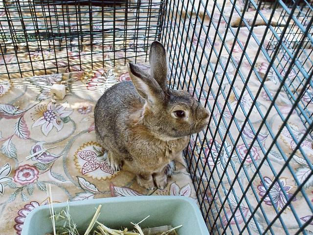 bunny!