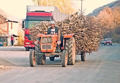 Hauling wood north of Mitrovica, Kosovo, November 7, 2010 (Ivan S. Abrams) Tags: ivansabrams abramsandmcdanielinternationallawandeconomicdiplomacy ivansabramsarizonaattorney ivansabramsbauniversityofpittsburghjduniversityofpittsburghllmuniversityofarizonainternationallawyer