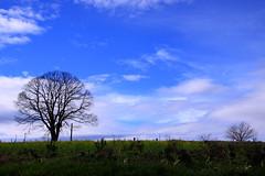 Nalgures entre Ansemil e Martixe (Matsuo Basho) Tags: tree arbol galicia galiza pontevedra