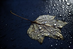 Leaf (absencesix) Tags: november sky usa macro nature wet leaves rain weather iso3200 washington unitedstates bokeh noflash nighttime redmond raindrops northamerica locations 2010 microsoftcampus 2470mm 34mm manualmode daytodaylife canoneos1dsmarkii timeofday canon1dsmarkii redwestcampus camera:make=canon geo:state=washington exif:make=canon exif:focal_length=34mm geo:city=redmond exif:iso_speed=3200 hasmetastyletag hascameratype adjectivesfeelingdescription selfrating4stars 18secatf28 microsoftnorthcampus geo:countrys=usa exif:lens=240700mm exif:model=canoneos1dsmarkii camera:model=canoneos1dsmarkii exif:aperture=28 subjectdistanceunknown redmondwashingtonusa november92010 geo:lat=47658385669014 geo:lon=12213855113946 473930n122819w