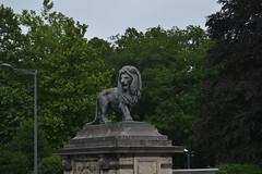 Bruselas (Bélgica) (littlecastle96) Tags: geografíahumana bélgica bruselas edificio monumento turismo león lion statue estatua belgium decoración decoration
