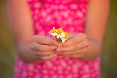 Una, dos, tres florecitas... (Nathalie Le Bris) Tags: birthday flower flor hand felicidades anniversaire