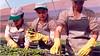 Curso a Distância Produção de Mudas de Café em Saquinhos e Tubetes CPT (portalminas) Tags: curso distância produção de mudas café em saquinhos e tubetes cpt