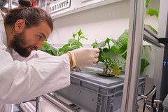 Conrad Zeidler untersucht eine Gurkenpflanze im EDEN:ISS Gewächshaus