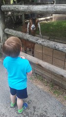 """Paul at the Deanna Rose Children's Farmstead • <a style=""""font-size:0.8em;"""" href=""""http://www.flickr.com/photos/109120354@N07/35659215086/"""" target=""""_blank"""">View on Flickr</a>"""
