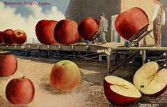Mammoth Oregon Apples (Alan Mays) Tags: ephemera postcards talltalepostcards paper printed talltales exaggerations oversized giant fantasy mammoth huge apples handtrucks men loading railroads trains railroadcars sp sprr southernpacific southernpacificrailroad humor humorous funny comic illustrations red 1907 1900s antique old vintage oakes mloakes photographers postcardpublishers portlandpostcardco seattle wa wash washington portland or ore oregon