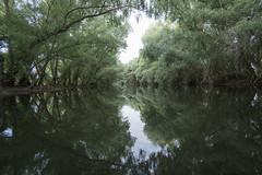 Danube delta - Romania (wietsej) Tags: danube delta romania river sony a7rii a7rm2 1018 sel1018 trees donau wildpix ultima frontiera roemenie