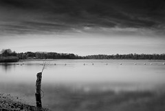 (there is) still life (-justk-) Tags: longexposure bw copyright lake pole ndfilter silentwaters 25seconds blackwhitephotos 10stops allmyimagesarecopyrightedallrightsreserveddonotusecopyandeditmyimageswithoutmypermission blosodomeinhofstade