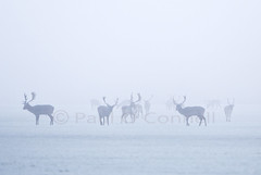 Christmas Day, Phoenix Park. (Paul O' Connell) Tags: park santa christmas xmas ireland winter dublin mist snow cold