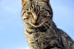 Cat (AragianMarko) Tags: cat