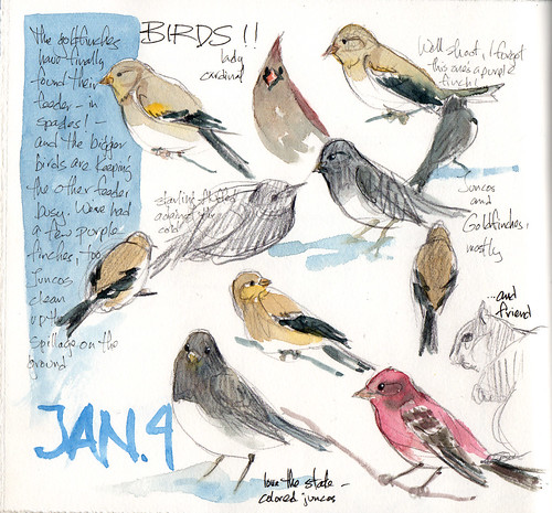 January 4, feeder birds