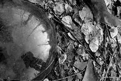 reflex (bmarco1981) Tags: bw digitale bn rifiuti digitalshot santarpino marcoboragine