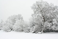park in winter (Thin Glass (Tweet @humanpilot)) Tags: park trees winter snow bench snowfall snowcovered winter2010uk