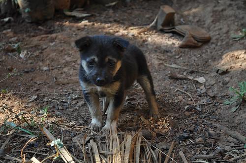 Campsite Puppy