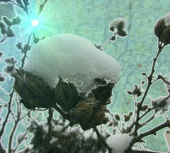 Winter light (Ameliepie) Tags: winter music snow cold film ice photoshop movie season frozen lyrics song cd gimp singer processing winterlight 2010 timfinn sountrack thechroniclesofnardia