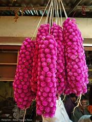 Mysore - Devaraja market (dietmut) Tags: travel flowers india tourism reisen asia journey karnataka mysore bloemen reizen azi federalstate panasoniclumix devarajamarket collagepink dmcfx500 dietmut deelstaat yourfavorites23 rozepinkrosa
