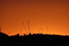arsi dal sole! (fabio giovanetti) Tags: tramonto fabio fiore scilla controluce lampedusa marittima