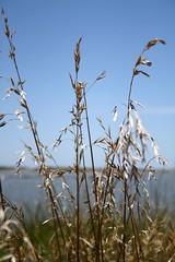 Sommerbrise (SabrinaDankel) Tags: sea summer water grass meer wasser sommer gras breeze brise