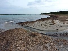 Ile Piana, plage de Piantarella, embouchure de l'étang de Piantarella