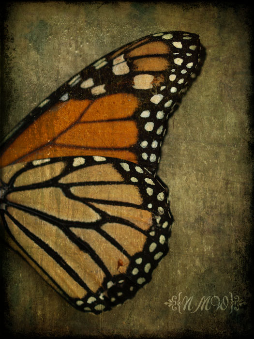 We delight in the beauty of the butterfly, but rarely admit the changes it has gone through to achieve that beauty. 21/365