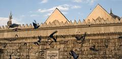 Pigeons and the Mosque, Damascus (richardavis) Tags: middleeast syria damascus unescoworldheritage surya siria  syrien syrie        szria   syyria   grandmosqueofdamascus   suriah sirija     siiwiya