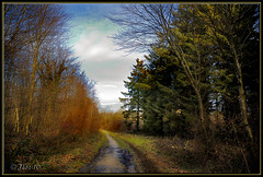 La forêt de Guînes
