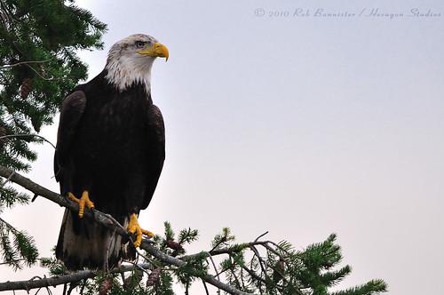 Eagle05