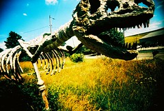 Dinosaur (kevin dooley) Tags: sculpture color art mi skeleton shark xpro crossprocessed saturated slim dino dinosaur kodak michigan jaw teeth wide vivid explore elitechrome viv vivitar ultra michiana ultrawideslim threeoaks ebx ultrawideandslim tempecamera vuws vivalaviv jimbrandys farworldstudios