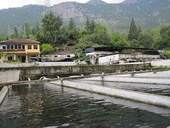 Ulupınar trout farm