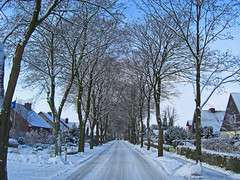 Winter Street (chrisshots) Tags: road street trees winter germany deutschland vanishingpoint casio paths caminhos exilim fluchtpunkt chrisshots kleinnordende exz1050 dorfstrase seenbymyeyes
