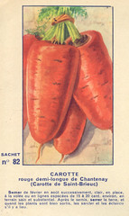 legume82 carotte