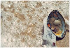 Sea Shells (jami_lee) Tags: ocean sea sand shell wave bubbles jonesbeach