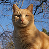 Ginge (hehaden) Tags: red animal cat catwomen square ginger chats kat feline tabby kitty gatto katzen kot cc100 kissablekat bestofcats impressedbeauty friendsofzeusphoebe
