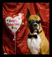 Top Dog Valentine's (MsMariannaB) Tags: red dog heart bowtie doodle boxer valentines doc burnett
