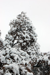 snowday.100211.04