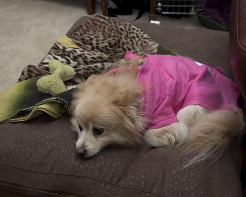 Cercei wearing her new Snuggie