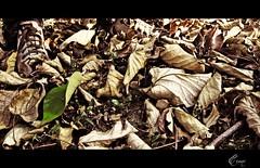 (Eruиэ!!) Tags: by de se foto no ve muerte vida esta pero zapato presencia camuflaje pisada gerals erune