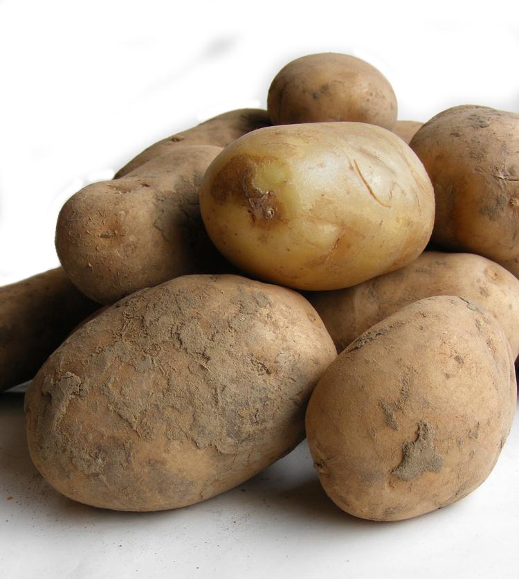Foto: Aardappel (algemeen)