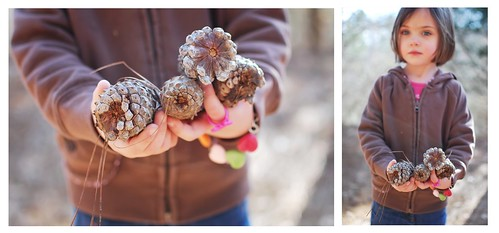 Bree Pine Cones