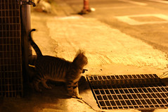 swing (Danny Chou) Tags: street cat photography voigtlander swing epson 50 f11 nokton  rd1    11