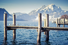 (Remo Hediger) Tags: winter mountain lake snow water landscape switzerland harbor spring wasser gulls luzern pilatus hafen lucerne vierwaldstttersee remo 1285 weggis pasajero 85l hediger