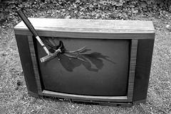 brAinpoWer kills TV!!! (cool_colonia4711) Tags: television hammer tv destruction demolition vandalism sledge fernsehen brainpower zerstörung intelligenz vandalismus picturetube fernsehapparat intellekt bildröhre nobrainnopain