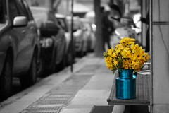 a little bit of happy (helen sotiriadis) Tags: street city blue bw white black flower cars monochrome yellow canon published dof bokeh athens depthoffield daffodil pitcher exarchia selectivecoloring canonef100mmf28macrousm canoneos40d toomanytribbles
