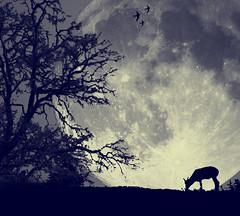 [フリー画像] グラフィックス, フォトアート, 月, 鹿・シカ, 201010180700