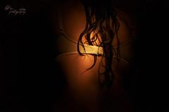 Self Portrait (Dia ) Tags: light selfportrait me wet dark hair back bra