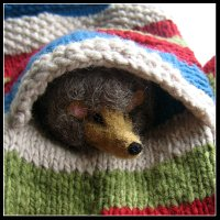 Hedgie....Are you in a 'Silly' Pocket?