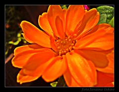 Um Presente Para Todas As Mulheres Do Flickr...A Gift For All Women From Flickr ... ( Photography Janaina Oshiro ) Tags: