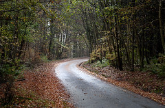 Scottish Road (PeterChad) Tags: auto road uk travel autumn holiday reflection tourism leaves car woodland landscape scotland automobile europe alone glow view tourist getty lone lonely distance dumfries