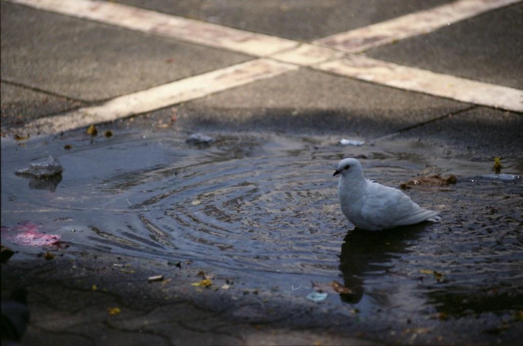 Burung mandi